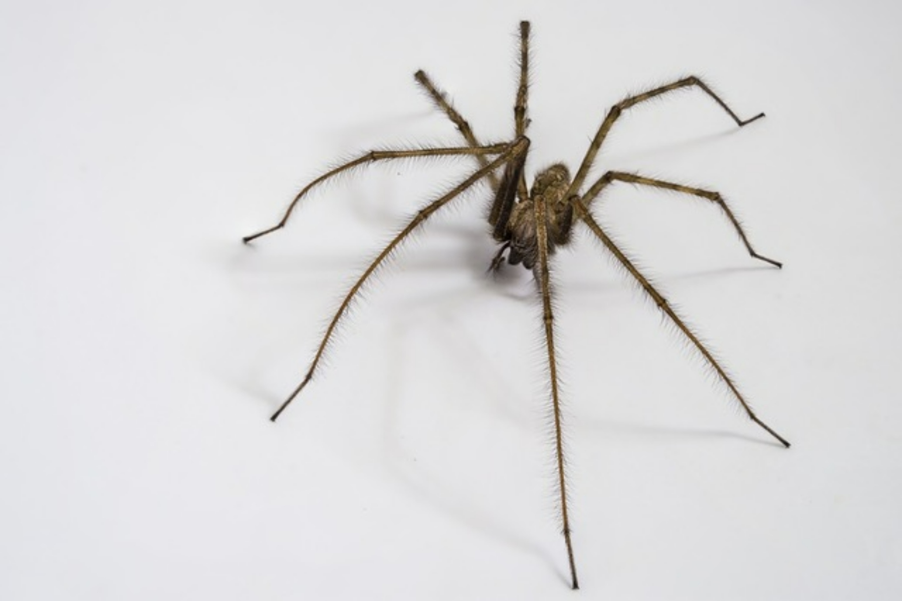 6 household items that will keep spiders out of your home