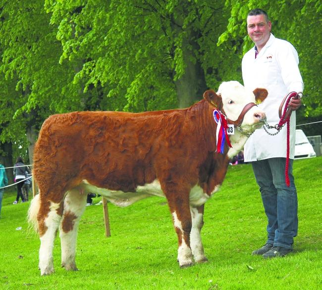 Scribby Farms win junior heifer derby