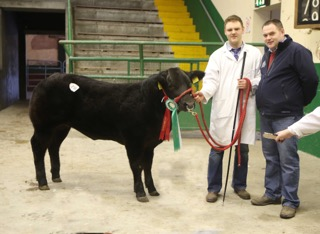 Richard Law with one of his prizewinner cattle at Allams.