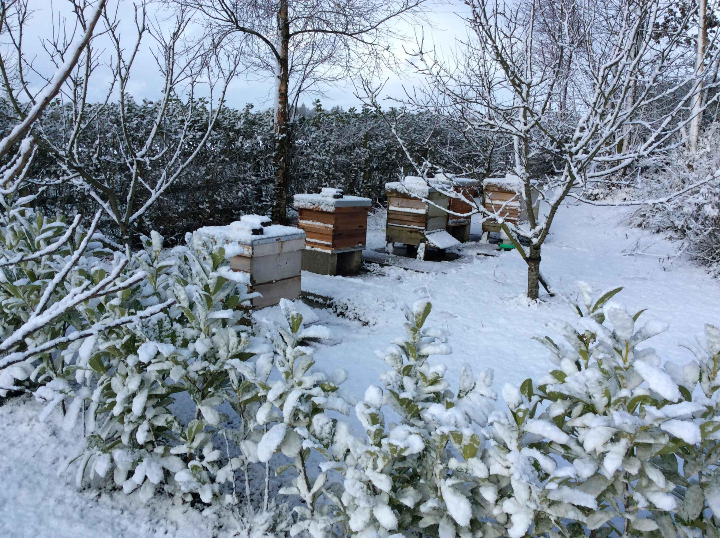 Beehives in the snow at the home of Noel McAlister, Chairman of Fermanagh Beekeepers' Association.