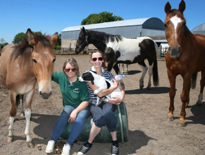 Carly MacBratney, volunteer and Kerri-Anne Fitzpatrick, with a selection of their horses.